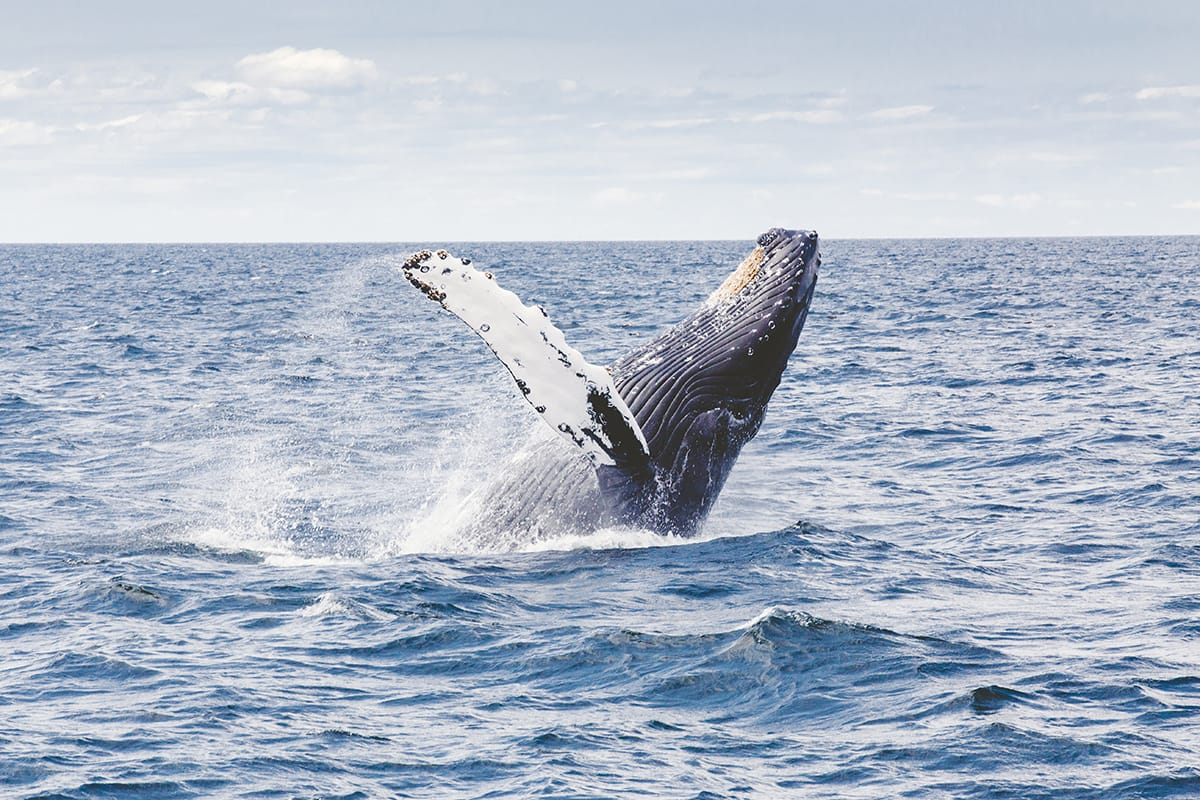 Witness nature at it's greatest, go on a whale watching trip